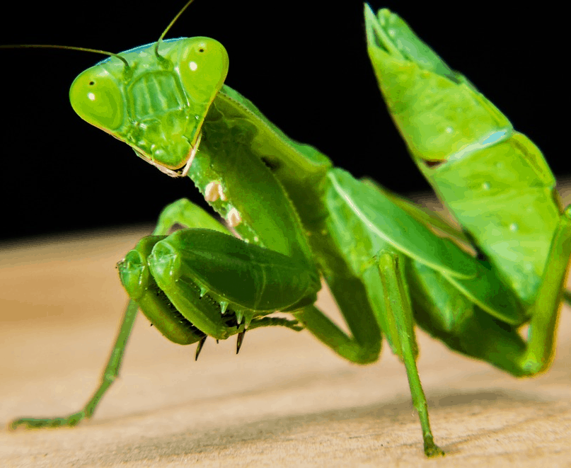 31 Animal Species that Take Survival to the Next Level