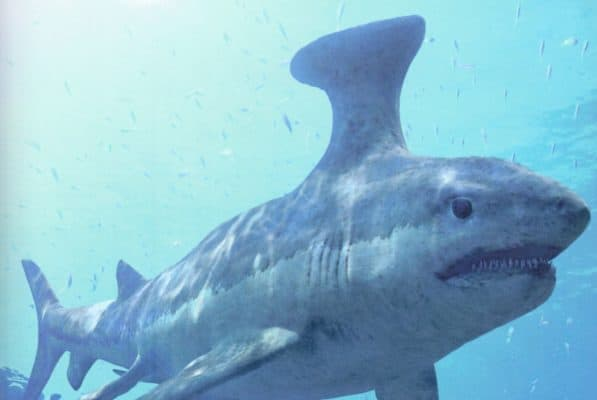 A List of Ancient Sharks from Small to Scary