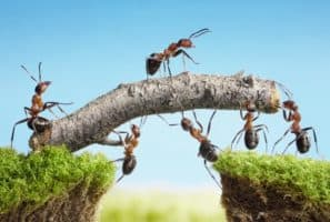 Here's How Ants and Other Animals Find Their Way Home
