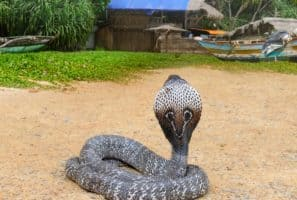 Avoid these Venomous Animals at All Costs