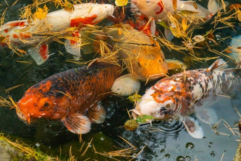 New Species Living in Fukushima, Japan's Nuclear Accident Zone
