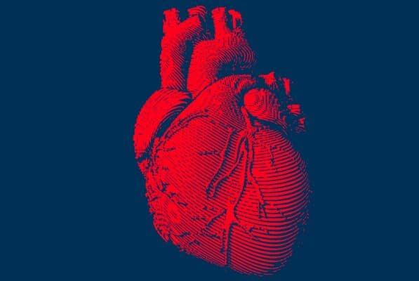 The Human Heart Explained So That Even A 5 Year Old Can Understand