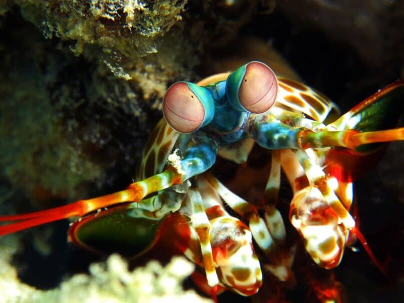 29 Sea Creatures with Superpower-Like Abilities