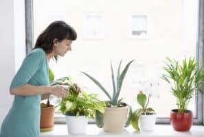 Exploring If Indoor Plants Really Improve Air Quality