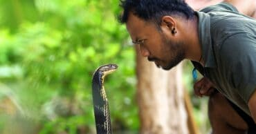 The Most Venomous Snakes On Planet Earth Today