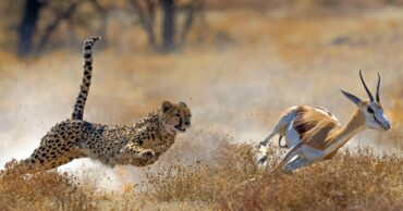 The Fastest Animals on the Planet Today